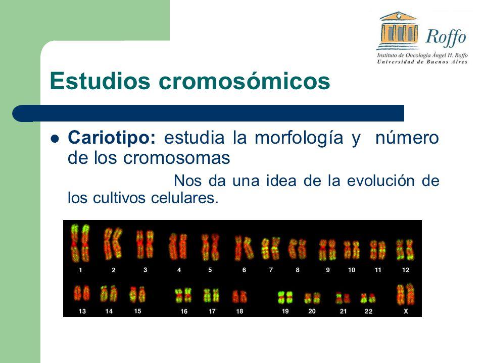 Estudios cromosómicos Cariotipo: estudia la morfología y número de los cromosomas Nos da una idea de la evolución de los cultivos celulares.