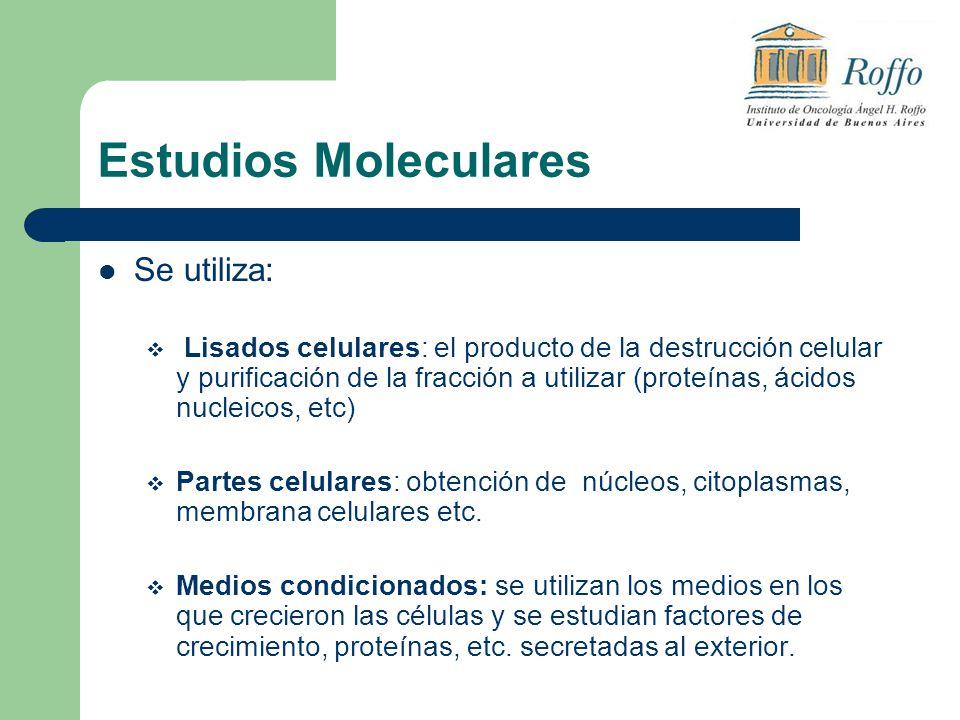 Se utiliza: Lisados celulares: el producto de la destrucción celular y purificación de la fracción a utilizar (proteínas, ácidos nucleicos, etc) Parte