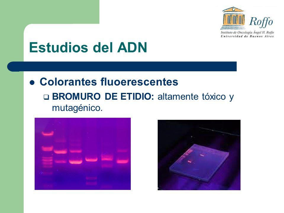 Estudios del ADN Colorantes fluoerescentes BROMURO DE ETIDIO: altamente tóxico y mutagénico.