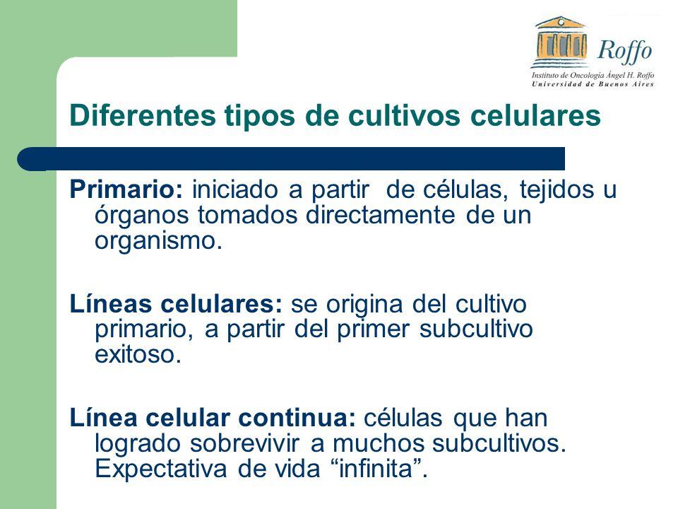 Diferentes tipos de cultivos celulares Primario: iniciado a partir de células, tejidos u órganos tomados directamente de un organismo. Líneas celulare