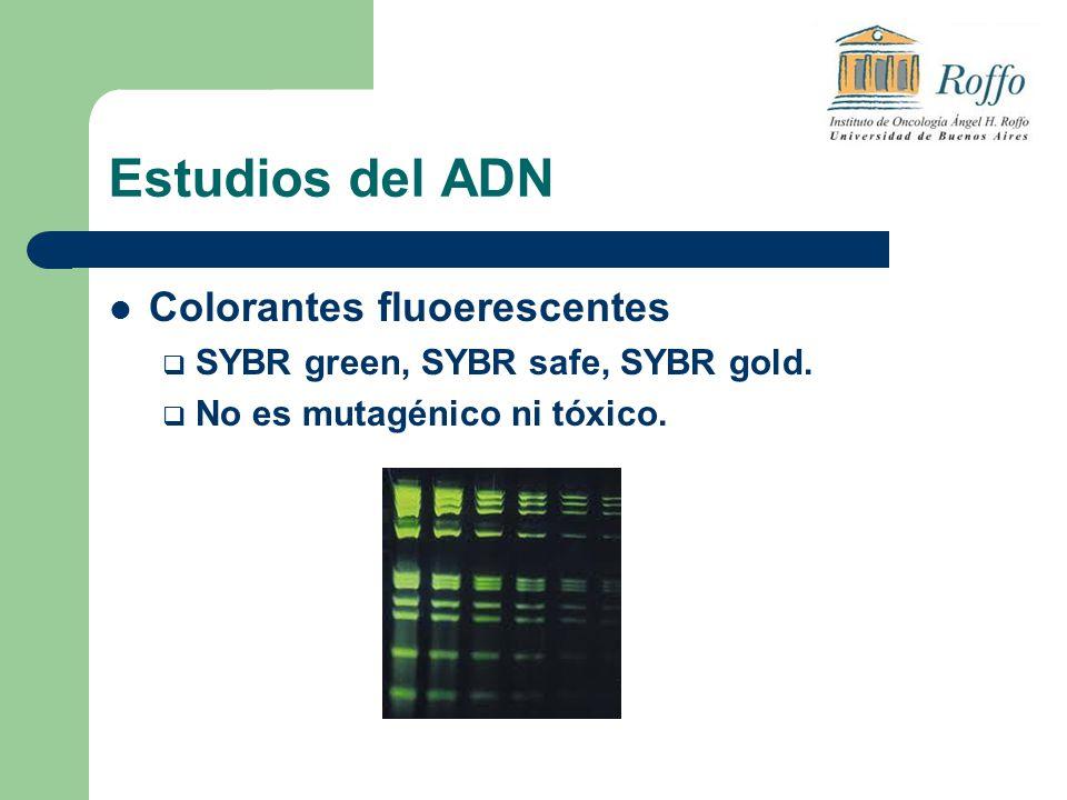 Estudios del ADN Colorantes fluoerescentes SYBR green, SYBR safe, SYBR gold. No es mutagénico ni tóxico.