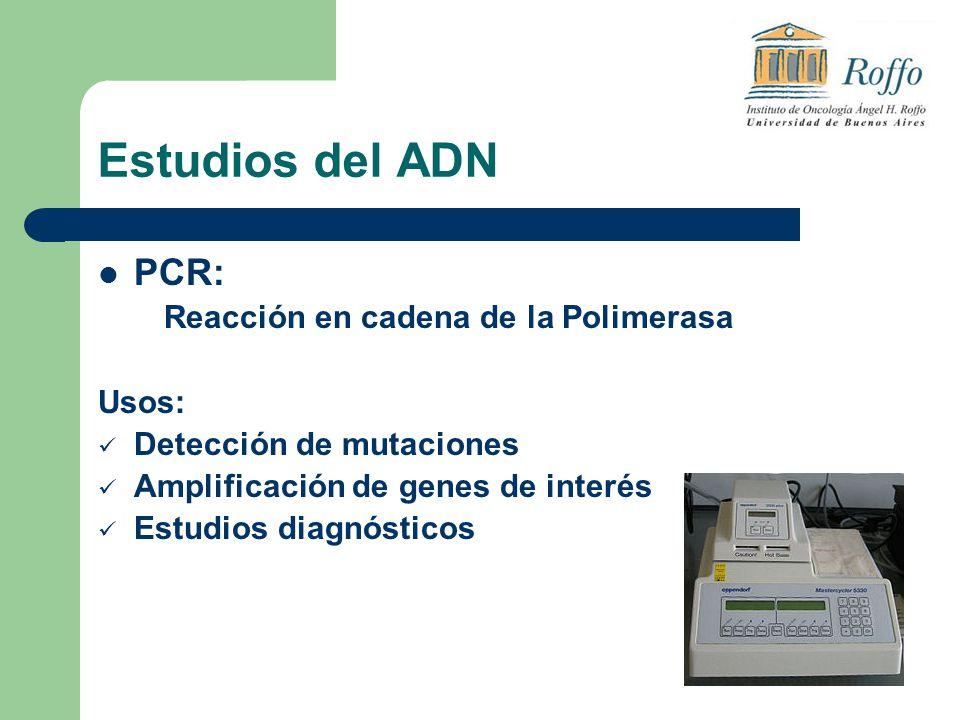 Estudios del ADN PCR: Reacción en cadena de la Polimerasa Usos: Detección de mutaciones Amplificación de genes de interés Estudios diagnósticos