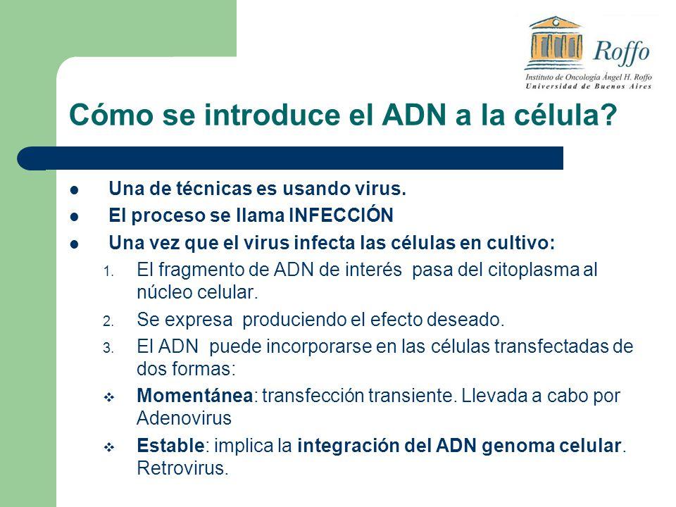 Cómo se introduce el ADN a la célula? Una de técnicas es usando virus. El proceso se llama INFECCIÓN Una vez que el virus infecta las células en culti