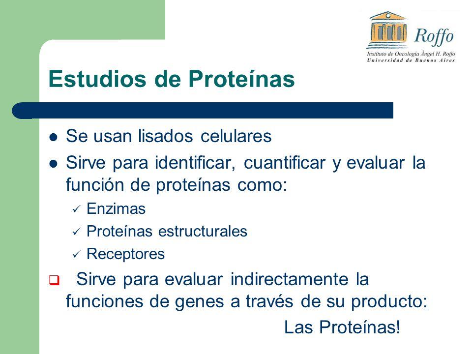 Estudios de Proteínas Se usan lisados celulares Sirve para identificar, cuantificar y evaluar la función de proteínas como: Enzimas Proteínas estructurales Receptores Sirve para evaluar indirectamente la funciones de genes a través de su producto: Las Proteínas!