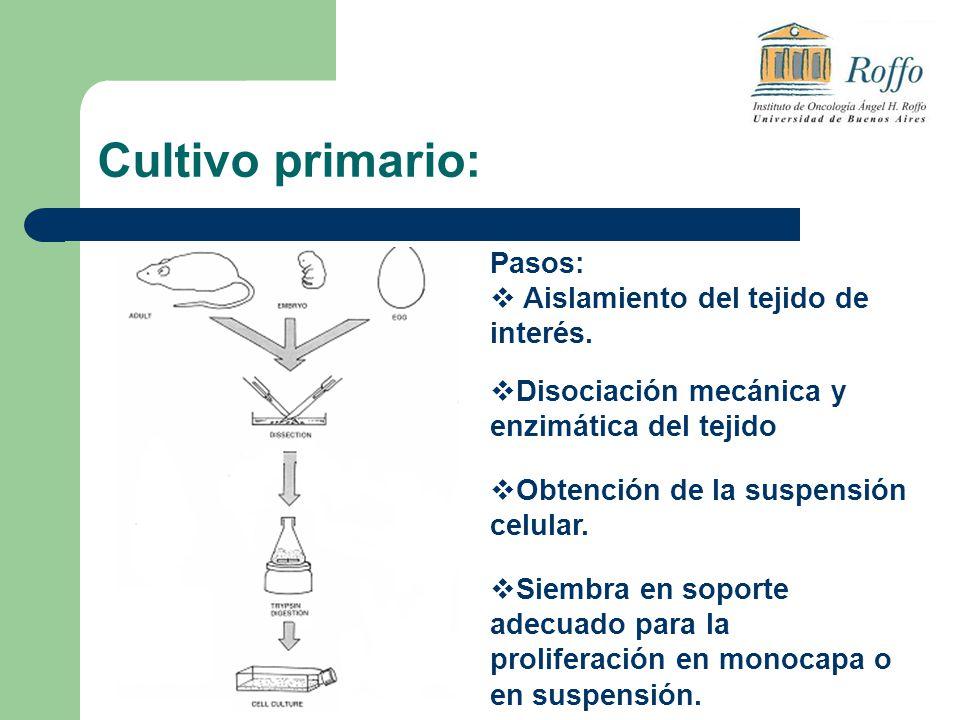 Cultivo primario: Pasos: Aislamiento del tejido de interés. Disociación mecánica y enzimática del tejido Obtención de la suspensión celular. Siembra e
