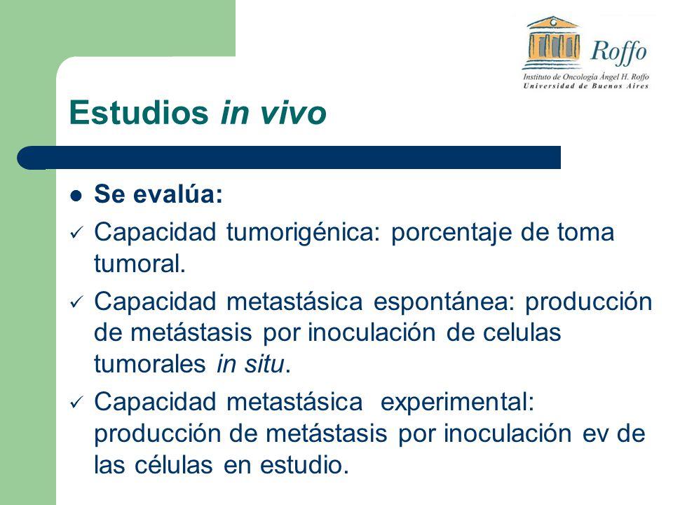Estudios in vivo Se evalúa: Capacidad tumorigénica: porcentaje de toma tumoral. Capacidad metastásica espontánea: producción de metástasis por inocula