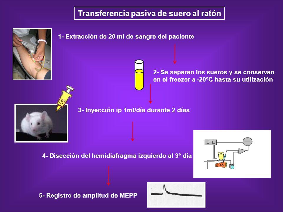1- Extracción de 20 ml de sangre del paciente 4- Disección del hemidiafragma izquierdo al 3° día 3- Inyección ip 1ml/día durante 2 días Transferencia