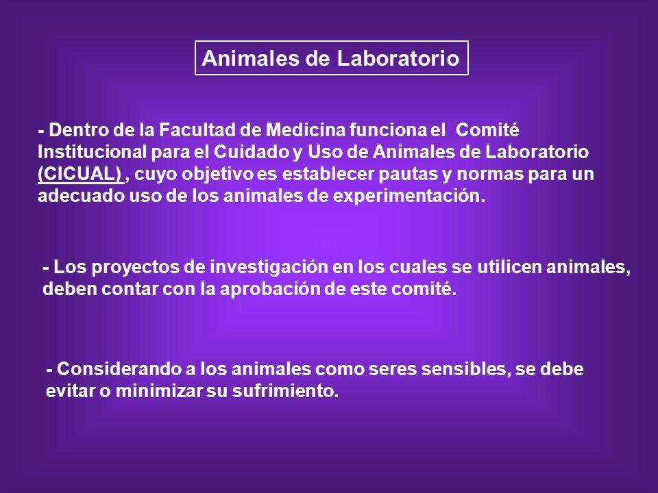 Animales de Laboratorio - Dentro de la Facultad de Medicina funciona el Comité Institucional para el Cuidado y Uso de Animales de Laboratorio (CICUAL)