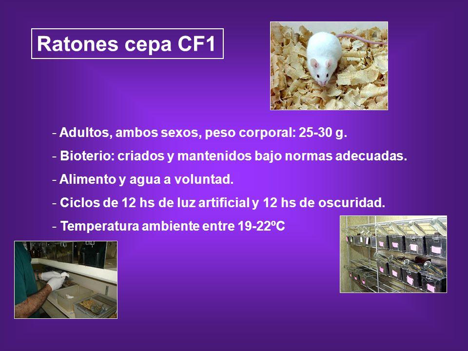 Ratones cepa CF1 - Adultos, ambos sexos, peso corporal: 25-30 g. - Bioterio: criados y mantenidos bajo normas adecuadas. - Alimento y agua a voluntad.