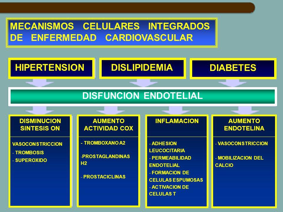 MECANISMOS CELULARES INTEGRADOS DE ENFERMEDAD CARDIOVASCULAR HIPERTENSION DISLIPIDEMIA DIABETES DISFUNCION ENDOTELIAL DISMINUCION SINTESIS ON VASOCONS