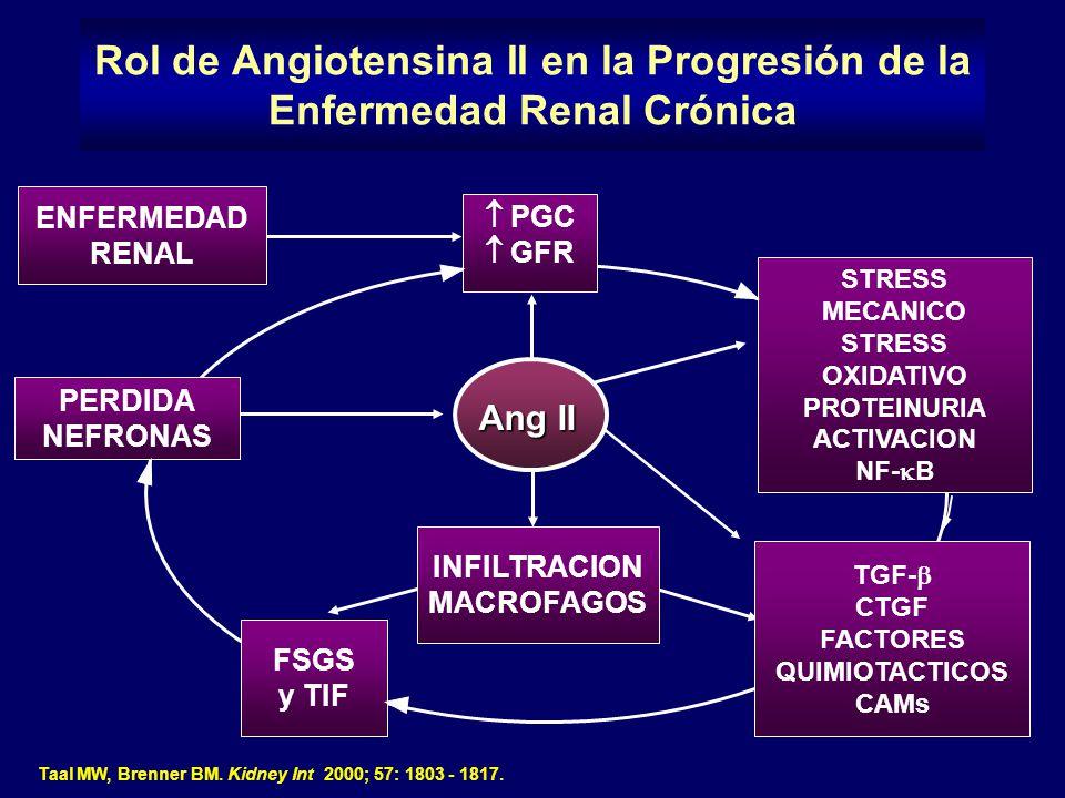Taal MW, Brenner BM. Kidney Int 2000; 57: 1803 - 1817. Rol de Angiotensina II en la Progresión de la Enfermedad Renal Crónica PGC GFR Ang II STRESS ME