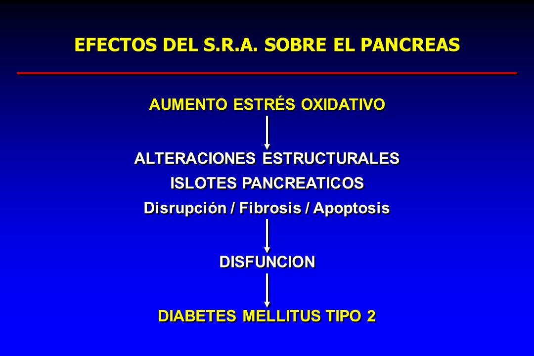 EFECTOS DEL S.R.A. SOBRE EL PANCREAS AUMENTO ESTRÉS OXIDATIVO ALTERACIONES ESTRUCTURALES ISLOTES PANCREATICOS Disrupción / Fibrosis / Apoptosis ALTERA