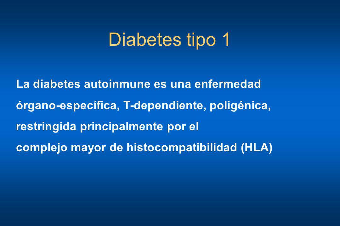 Diabetes tipo 1 La diabetes autoinmune es una enfermedad órgano-específica, T-dependiente, poligénica, restringida principalmente por el complejo mayo