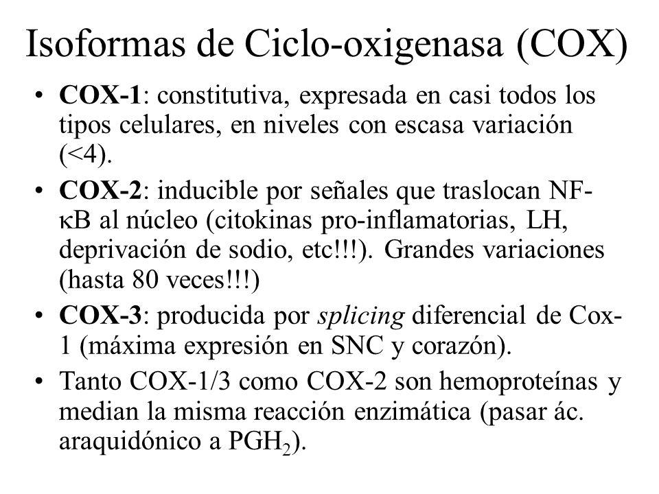 Isoformas de Ciclo-oxigenasa (COX) COX-1: constitutiva, expresada en casi todos los tipos celulares, en niveles con escasa variación (<4). COX-2: indu