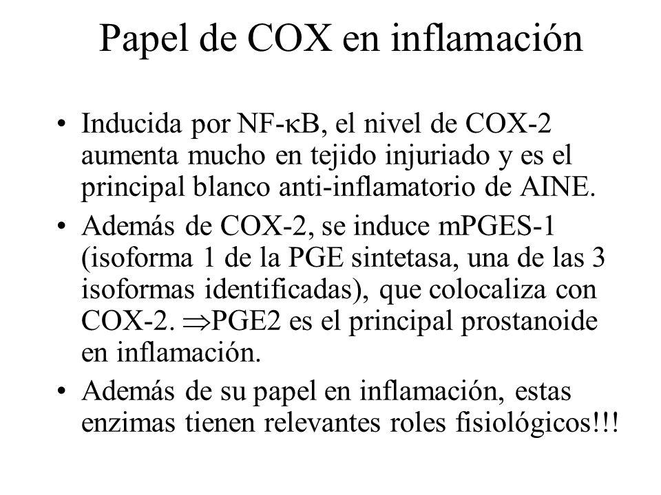 Papel de COX en inflamación Inducida por NF- B, el nivel de COX-2 aumenta mucho en tejido injuriado y es el principal blanco anti-inflamatorio de AINE