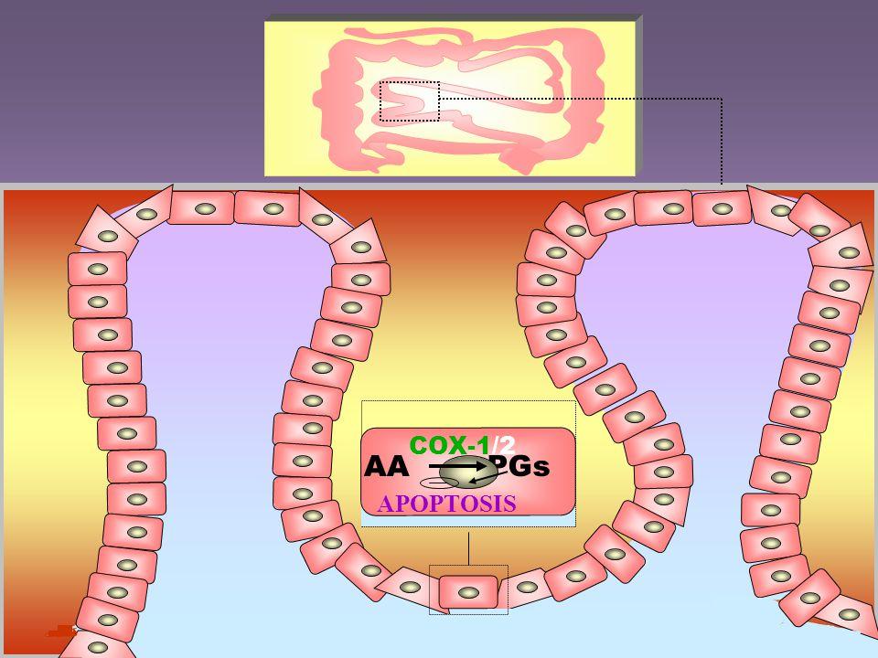 AAPGs COX-1/2 APOPTOSIS