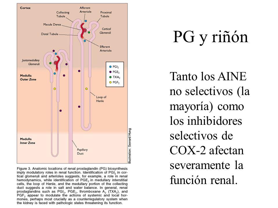PG y riñón Tanto los AINE no selectivos (la mayoría) como los inhibidores selectivos de COX-2 afectan severamente la función renal.