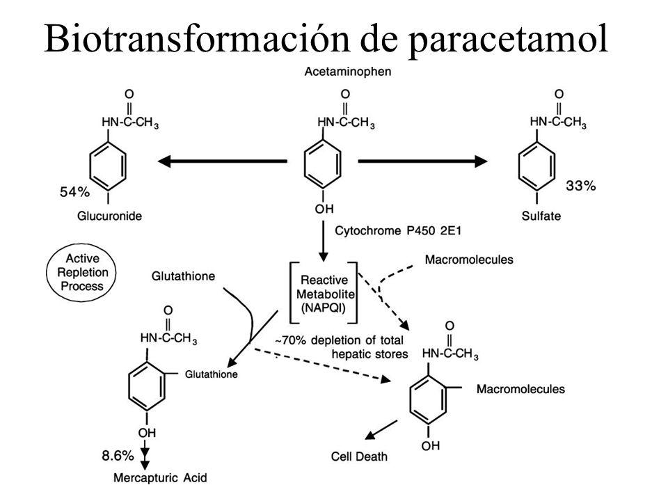 Biotransformación de paracetamol