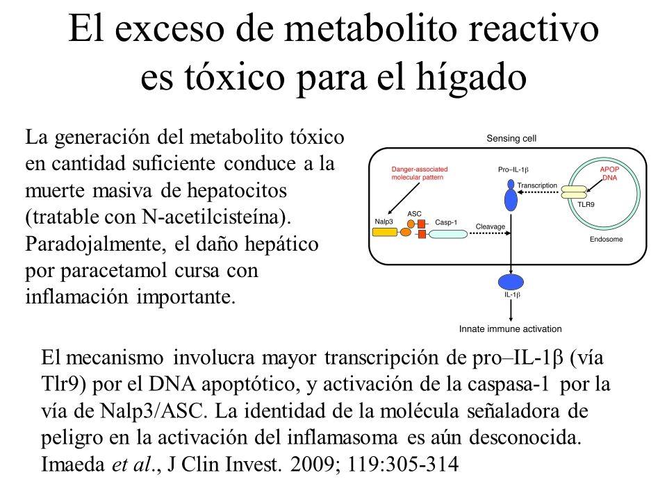 El exceso de metabolito reactivo es tóxico para el hígado La generación del metabolito tóxico en cantidad suficiente conduce a la muerte masiva de hep