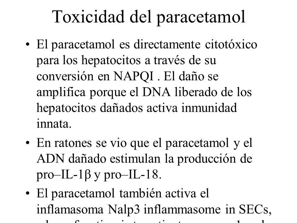 Toxicidad del paracetamol El paracetamol es directamente citotóxico para los hepatocitos a través de su conversión en NAPQI. El daño se amplifica porq