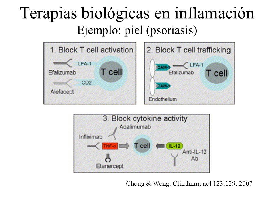Terapias biológicas en inflamación Ejemplo: piel (psoriasis) Chong & Wong, Clin Immunol 123:129, 2007