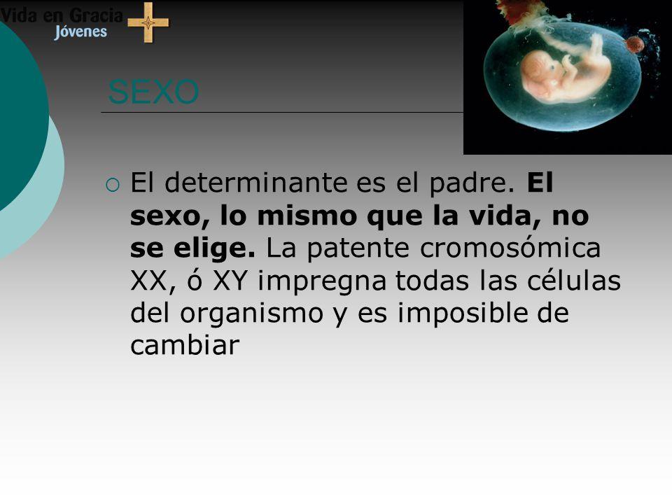 SEXO El determinante es el padre.El sexo, lo mismo que la vida, no se elige.