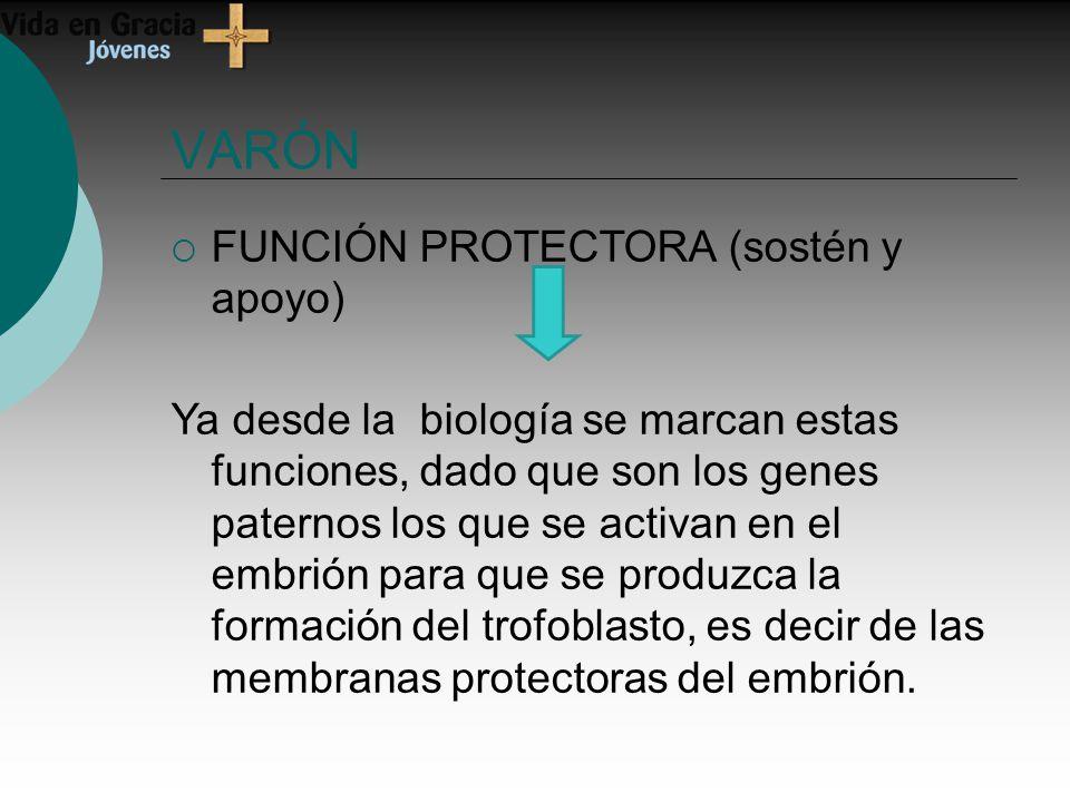 VARÓN FUNCIÓN PROTECTORA (sostén y apoyo) Ya desde la biología se marcan estas funciones, dado que son los genes paternos los que se activan en el embrión para que se produzca la formación del trofoblasto, es decir de las membranas protectoras del embrión.