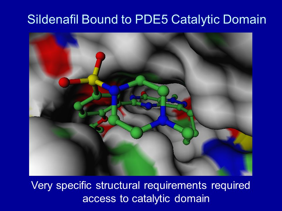 Sildenafil Bound to PDE5 Catalytic Domain Very specific structural requirements required access to catalytic domain