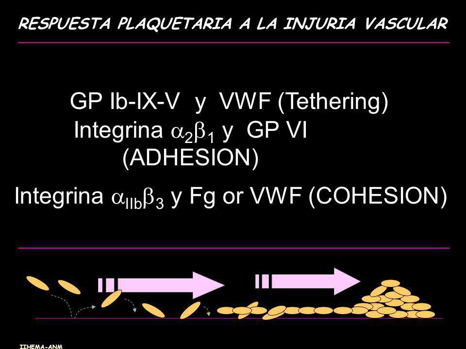 GP Ib-IX-V y VWF (Tethering) Integrina IIb 3 y Fg or VWF (COHESION) Integrina 2 1 y GP VI (ADHESION) RESPUESTA PLAQUETARIA A LA INJURIA VASCULAR IIHEM