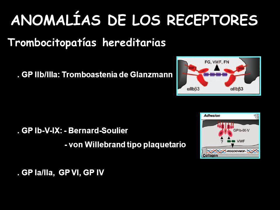 . GP IIb/IIIa: Tromboastenia de Glanzmann. GP Ib-V-IX: - Bernard-Soulier - von Willebrand tipo plaquetario. GP Ia/IIa, GP VI, GP IV Trombocitopatías h