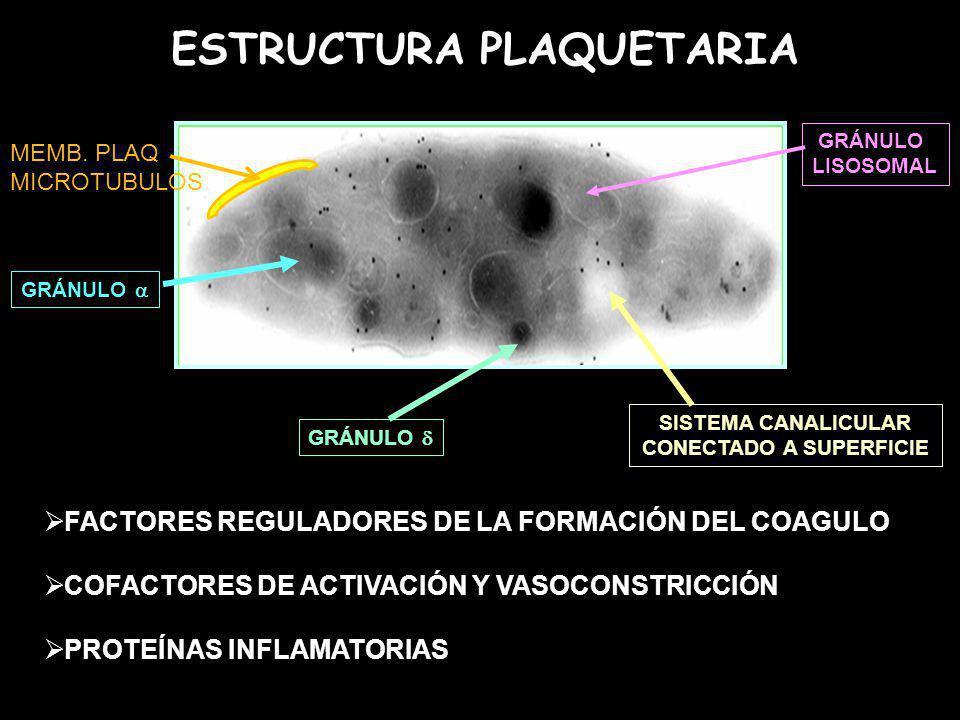 ESTRUCTURA PLAQUETARIA GRÁNULO SISTEMA CANALICULAR CONECTADO A SUPERFICIE GRÁNULO LISOSOMAL FACTORES REGULADORES DE LA FORMACIÓN DEL COAGULO COFACTORE