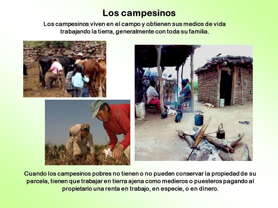 Los campesinos Los campesinos viven en el campo y obtienen sus medios de vida trabajando la tierra, generalmente con toda su familia. Cuando los campe