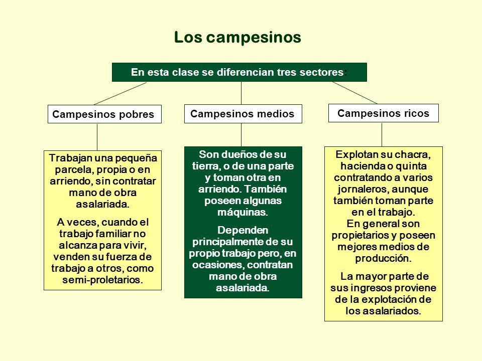 Los campesinos En esta clase se diferencian tres sectores: Campesinos pobres Campesinos medios Campesinos ricos Trabajan una pequeña parcela, propia o