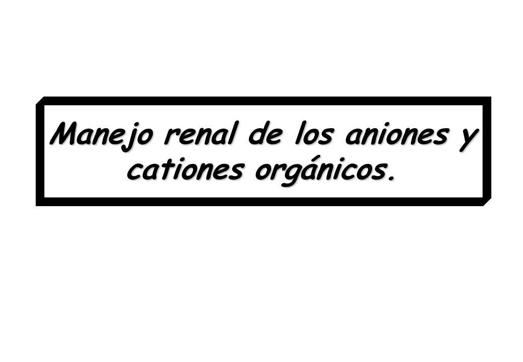 Maduración del sistema de transporte de aniones y cationes orgánicos La capacidad para eliminar OA es un fenómeno relacionado con la edad.