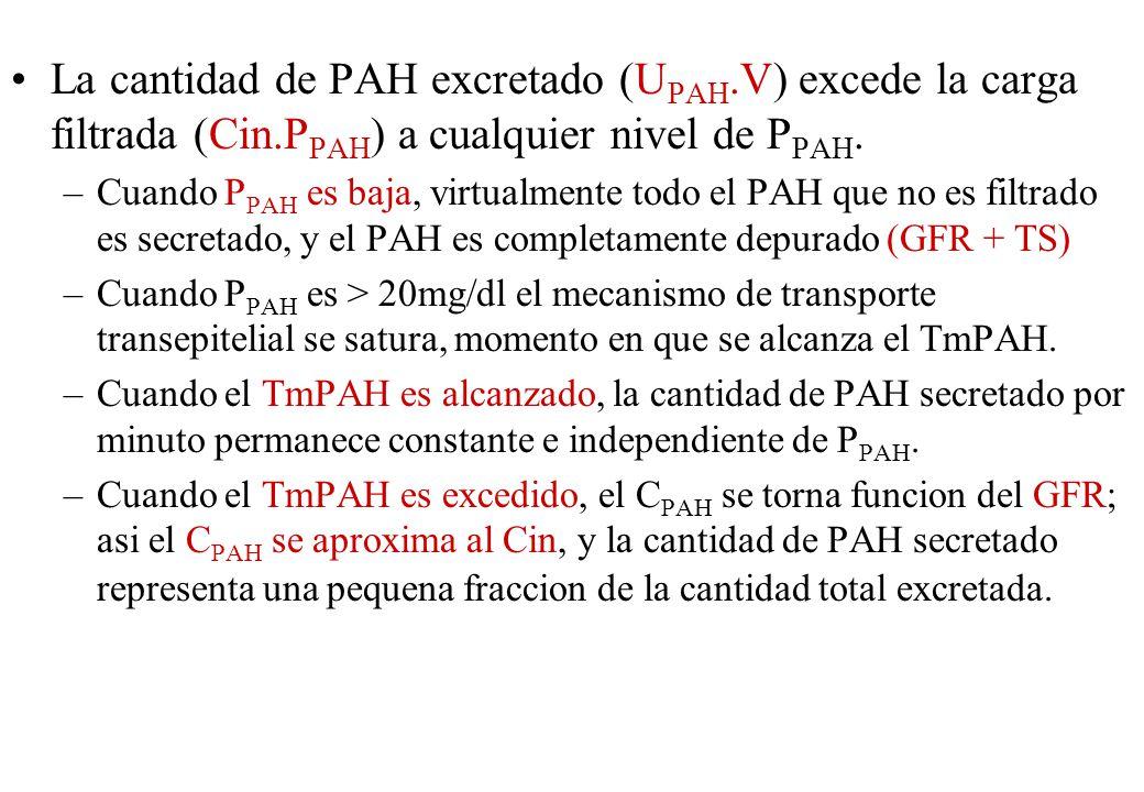 La cantidad de PAH excretado (U PAH.V) excede la carga filtrada (Cin.P PAH ) a cualquier nivel de P PAH. –Cuando P PAH es baja, virtualmente todo el P