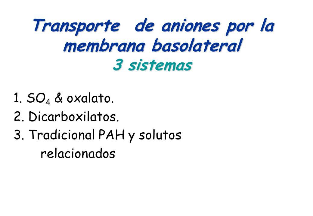Transporte de aniones por la membrana basolateral 3 sistemas 1. SO 4 & oxalato. 2. Dicarboxilatos. 3. Tradicional PAH y solutos relacionados