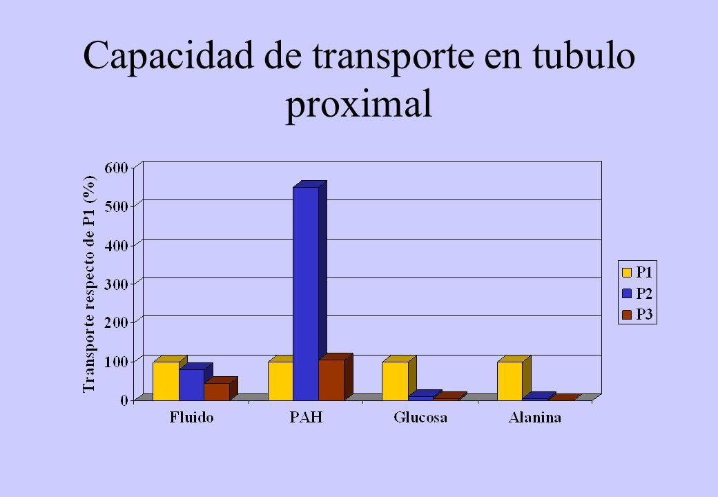 Capacidad de transporte en tubulo proximal