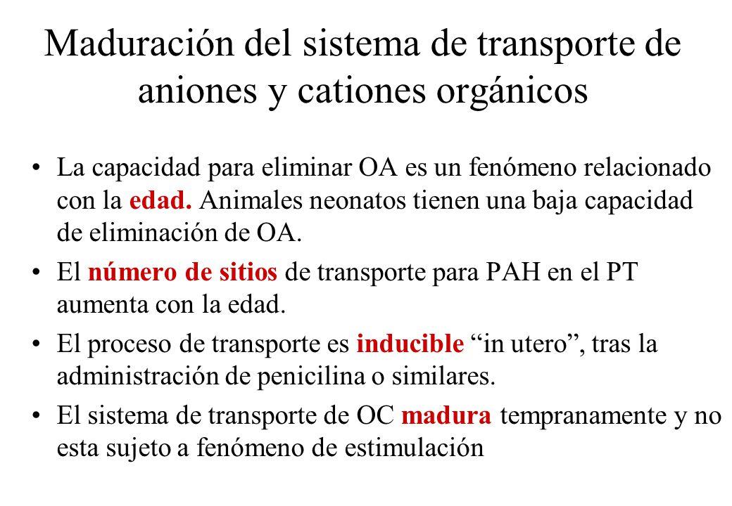 Maduración del sistema de transporte de aniones y cationes orgánicos La capacidad para eliminar OA es un fenómeno relacionado con la edad. Animales ne