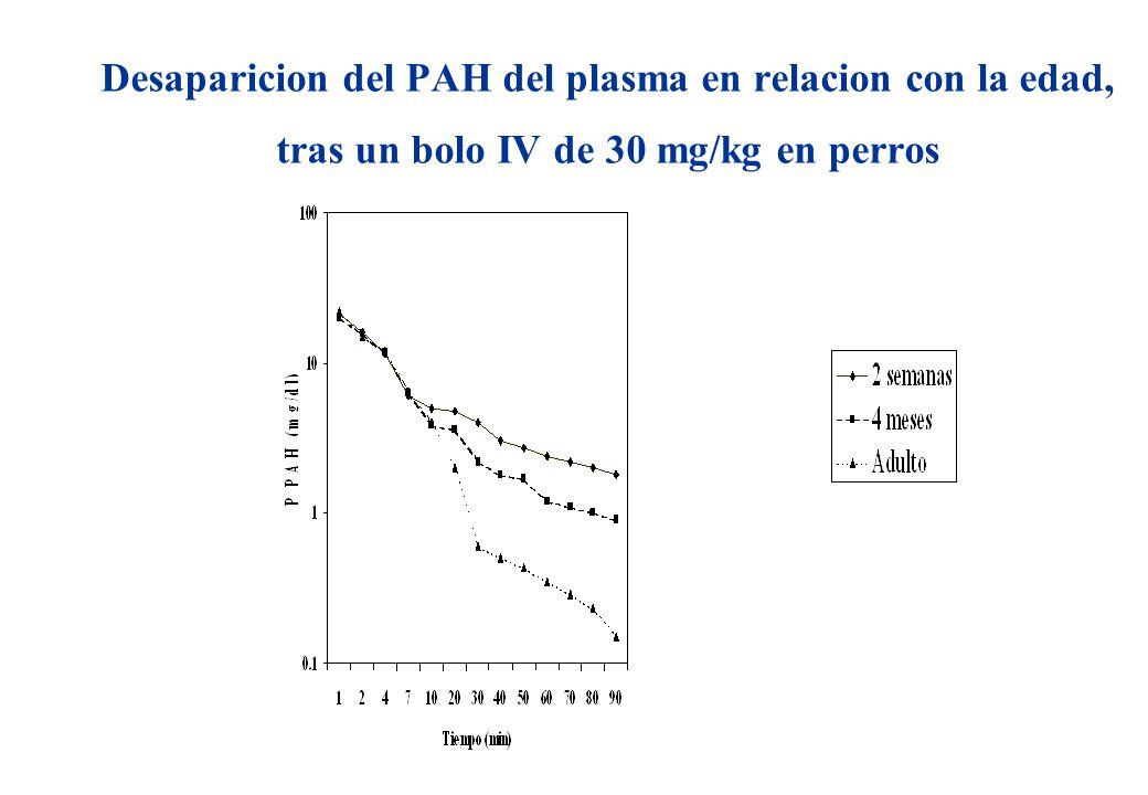 Desaparicion del PAH del plasma en relacion con la edad, tras un bolo IV de 30 mg/kg en perros