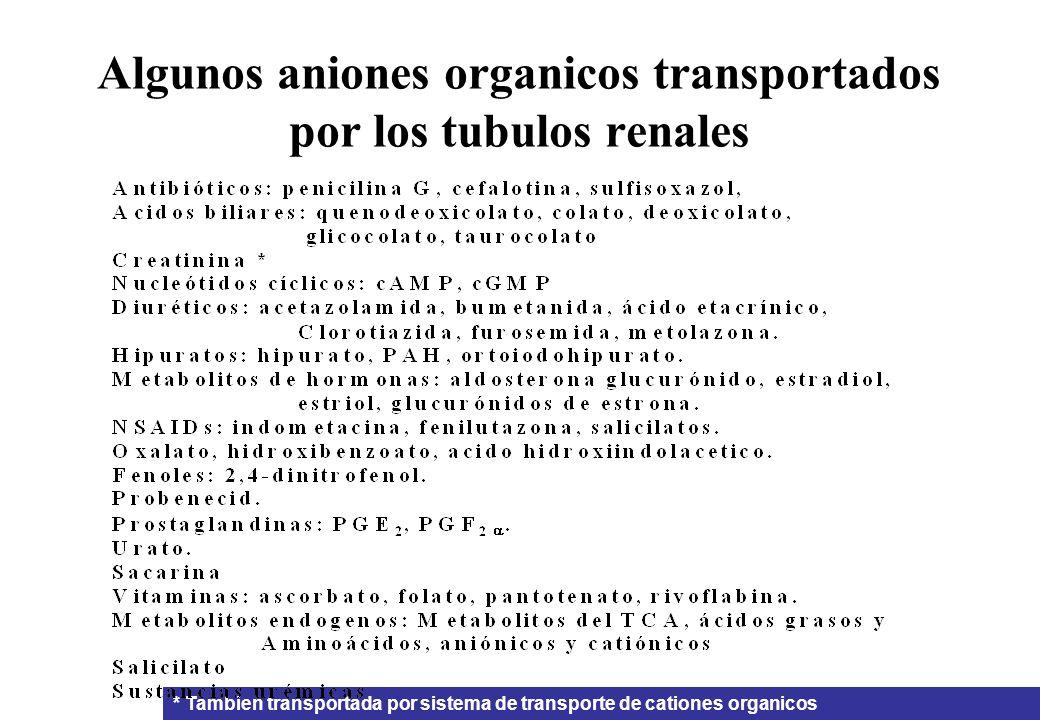 Algunos aniones organicos transportados por los tubulos renales * Tambien transportada por sistema de transporte de cationes organicos