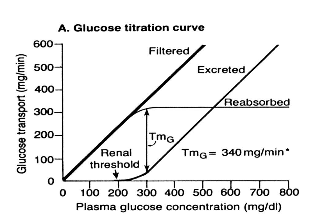 Propiedades del acido urico Acido debil; el 1 er proton se disocia a pH 5.75 98% de acido urico circula en plasma, LEC y fluido sinovial en su forma ionizada (urato) El urato es ultrafiltrable, 5% se halla unido a proteinas y el plasma se satura con concentraciones superiores a 6.8 mg/dl.