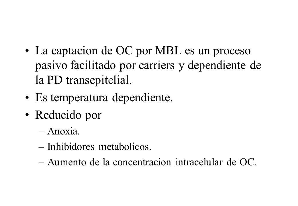 La captacion de OC por MBL es un proceso pasivo facilitado por carriers y dependiente de la PD transepitelial. Es temperatura dependiente. Reducido po