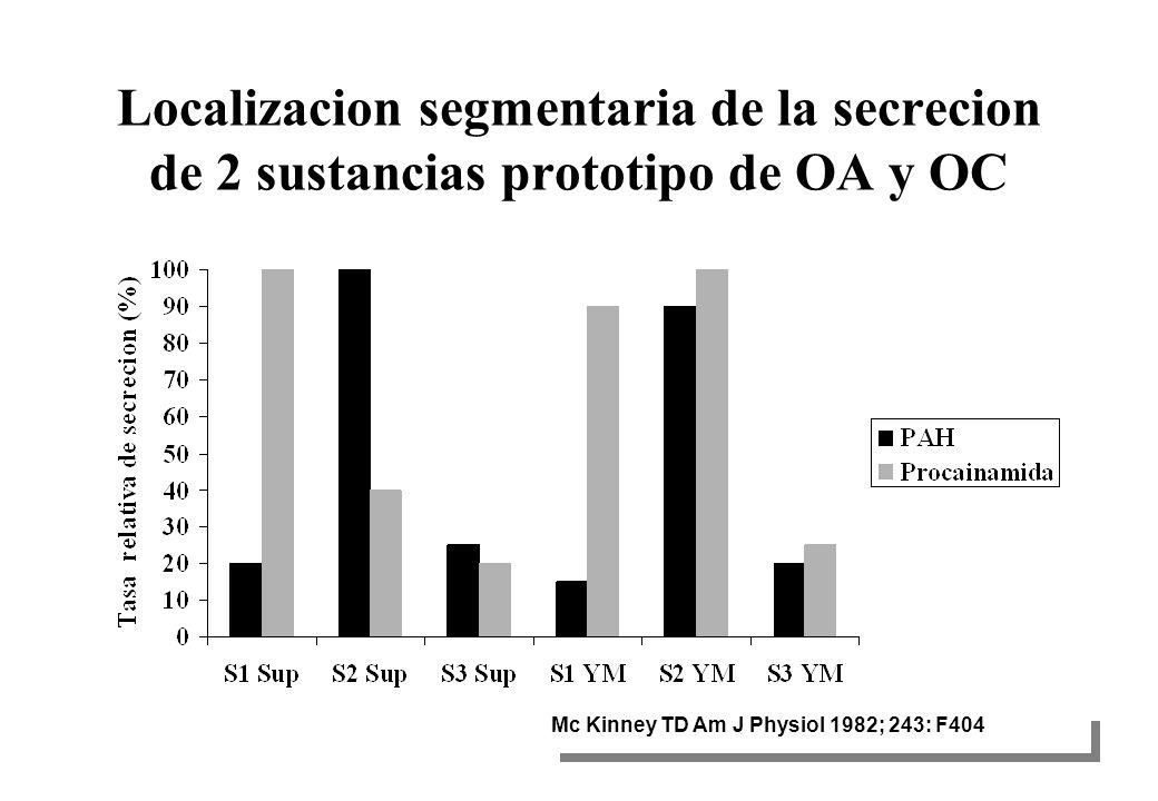 Localizacion segmentaria de la secrecion de 2 sustancias prototipo de OA y OC Mc Kinney TD Am J Physiol 1982; 243: F404