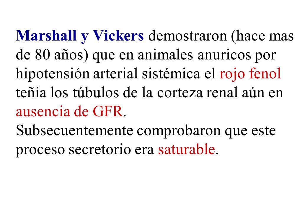 Marshall y Vickers demostraron (hace mas de 80 años) que en animales anuricos por hipotensión arterial sistémica el rojo fenol teñía los túbulos de la