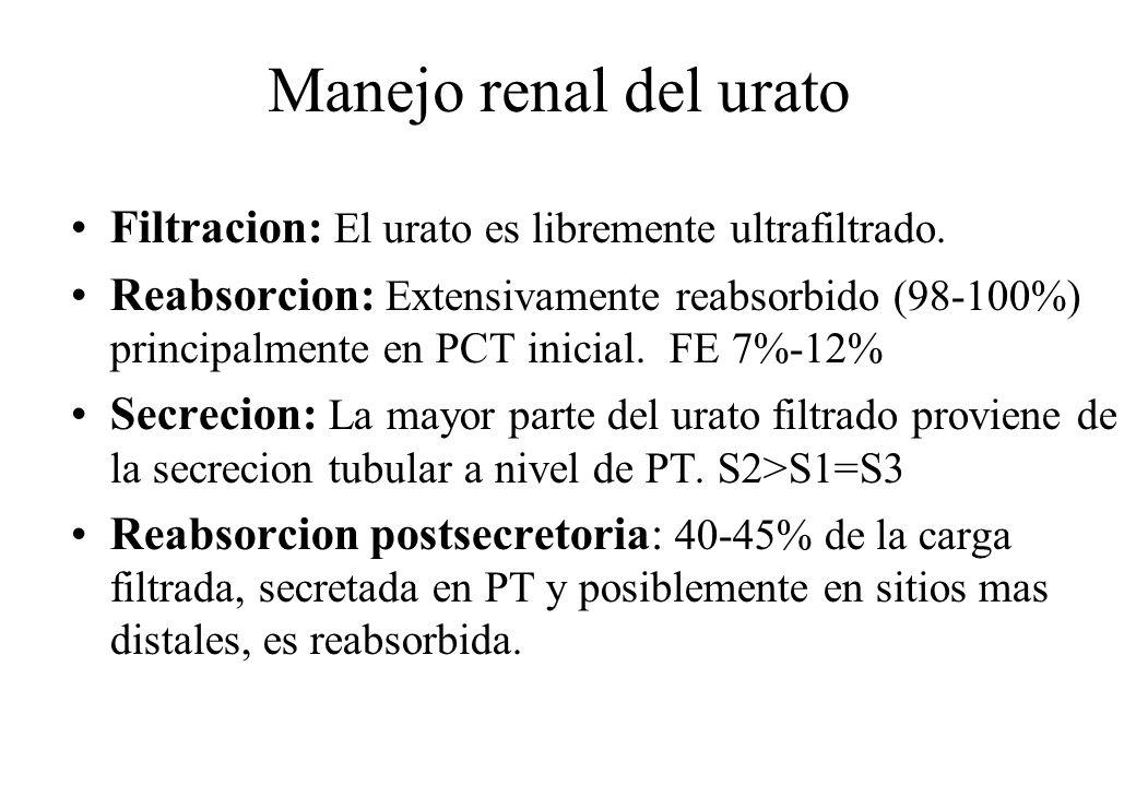 Manejo renal del urato Filtracion: El urato es libremente ultrafiltrado. Reabsorcion: Extensivamente reabsorbido (98-100%) principalmente en PCT inici