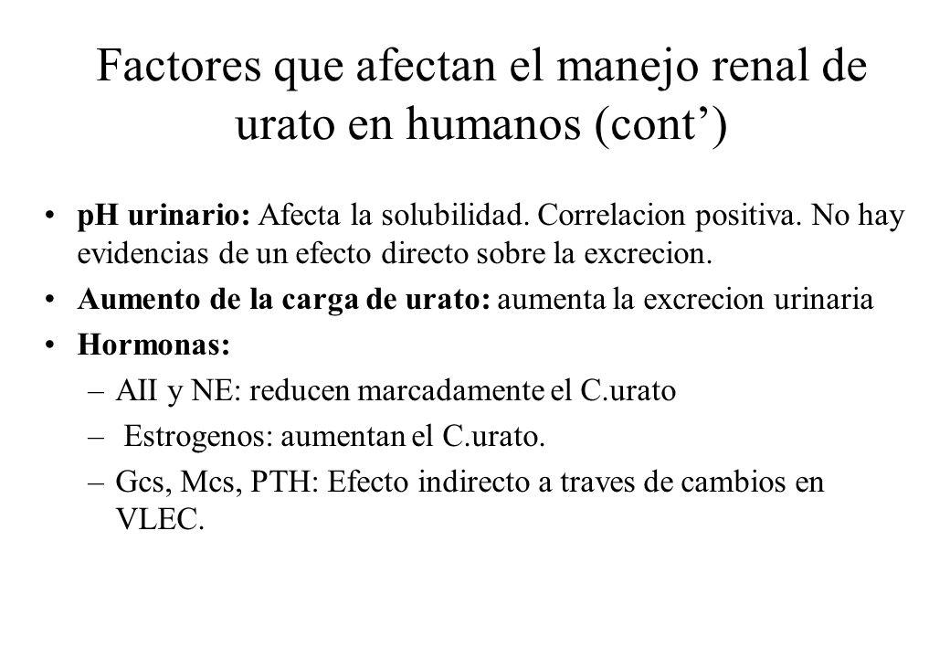 Factores que afectan el manejo renal de urato en humanos (cont) pH urinario: Afecta la solubilidad. Correlacion positiva. No hay evidencias de un efec