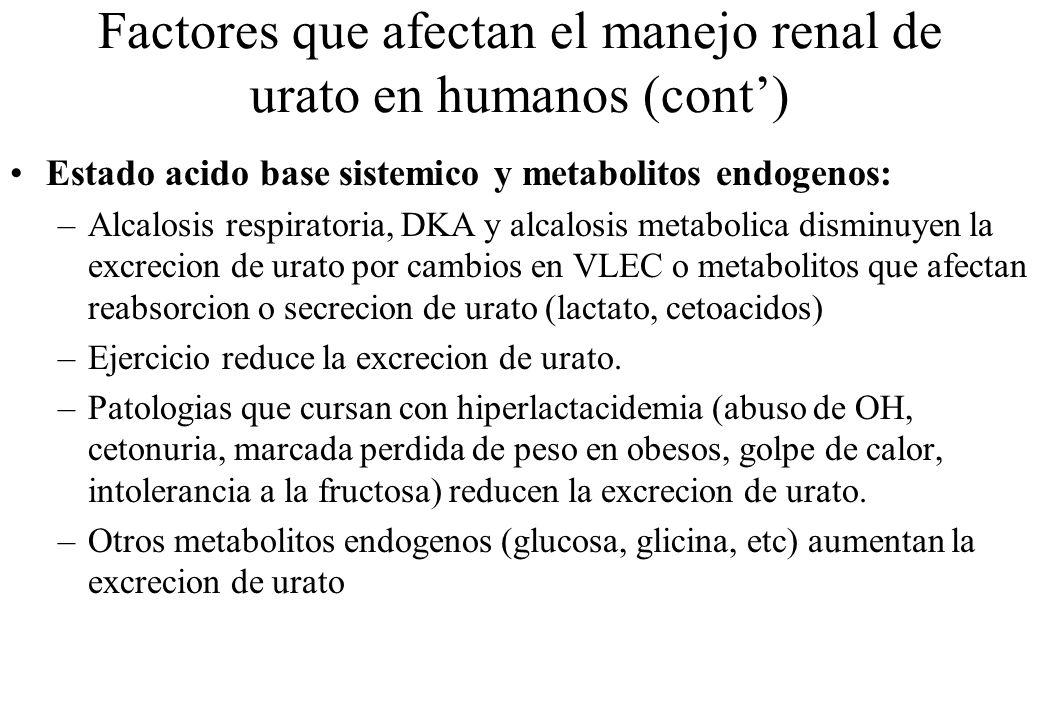 Factores que afectan el manejo renal de urato en humanos (cont) Estado acido base sistemico y metabolitos endogenos: –Alcalosis respiratoria, DKA y al