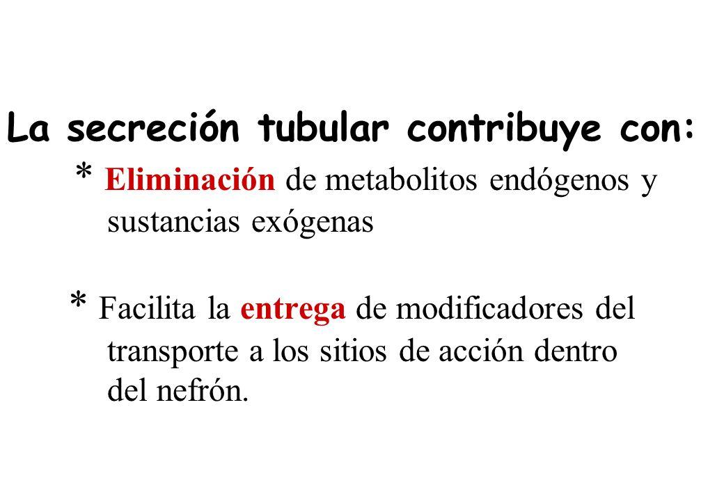 La secreción tubular contribuye con: * Eliminación de metabolitos endógenos y sustancias exógenas * Facilita la entrega de modificadores del transport