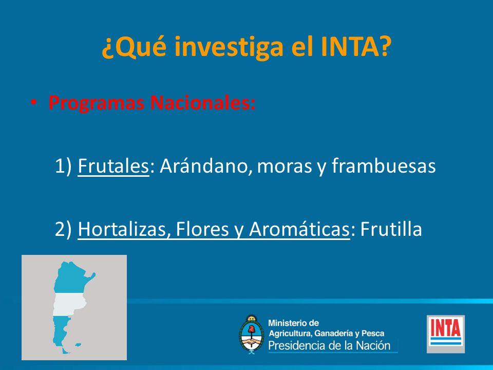 ¿Qué investiga el INTA? Programas Nacionales: 1) Frutales: Arándano, moras y frambuesas 2) Hortalizas, Flores y Aromáticas: Frutilla