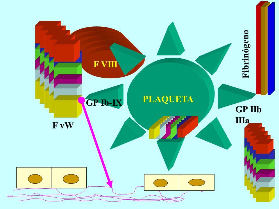 F VIII C F vW PLAQUETA GP Ib-IX GP IIb IIIa Fibrinógeno